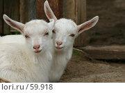 Купить «Два козленка», фото № 59918, снято 16 мая 2006 г. (c) Останина Екатерина / Фотобанк Лори