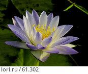 Купить «Бело-голубой цветок», фото № 61302, снято 21 апреля 2007 г. (c) Eleanor Wilks / Фотобанк Лори