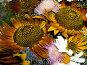 Букет полевых цветов, фото № 62222, снято 14 июля 2007 г. (c) Елена Руденко / Фотобанк Лори
