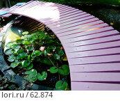 """Купить «Розовый мостик. """"Неделя садов"""".», фото № 62874, снято 17 июля 2007 г. (c) Тим Казаков / Фотобанк Лори"""