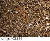 Купить «Пчелы на сотах», фото № 63990, снято 21 июля 2007 г. (c) Андрей Жданов / Фотобанк Лори