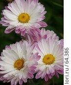 Купить «Цветы», эксклюзивное фото № 64386, снято 14 августа 2005 г. (c) Михаил Карташов / Фотобанк Лори