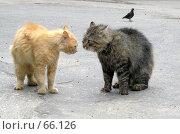 Купить «Кошачьи разборки», фото № 66126, снято 9 июня 2006 г. (c) Ермилова Арина / Фотобанк Лори