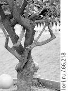 Купить «Деревце», фото № 66218, снято 18 июня 2007 г. (c) Лифанцева Елена / Фотобанк Лори