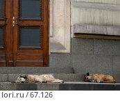Купить «Спящие собаки на ступенях у входа в каменный дом», фото № 67126, снято 20 апреля 2005 г. (c) Harry / Фотобанк Лори