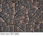 Купить «Глина потрескавшаяся от жары под закатным солнцем», фото № 67242, снято 26 августа 2004 г. (c) Harry / Фотобанк Лори