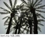 Купить «Пальмы», фото № 68346, снято 8 июля 2006 г. (c) Алена Сафронова / Фотобанк Лори