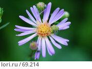Купить «Цветочек», фото № 69214, снято 1 августа 2007 г. (c) Лифанцева Елена / Фотобанк Лори
