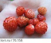 Купить «Лесная ягода на ладони», фото № 70158, снято 18 июля 2007 г. (c) Жуковина Наталья Дмитриевна / Фотобанк Лори