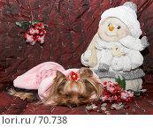 Купить «Йоркширский терьер  уснул рядом со снеговиком», фото № 70738, снято 24 октября 2006 г. (c) Ирина Мойсеева / Фотобанк Лори