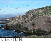 Купить «Птицы Типунковых островов», фото № 71198, снято 19 ноября 2006 г. (c) Елена Яковенко / Фотобанк Лори