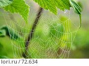 Паутинка в капельках росы. Стоковое фото, фотограф Александр Вальваков / Фотобанк Лори