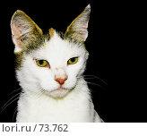 Купить «Портрет кошки», фото № 73762, снято 27 июля 2007 г. (c) Анатолий Теребенин / Фотобанк Лори