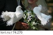 Купить «Свадебные голуби», фото № 74270, снято 18 августа 2007 г. (c) Морозова Татьяна / Фотобанк Лори
