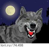 Купить «Оскал волка», иллюстрация № 74498 (c) Сергей Лаврентьев / Фотобанк Лори