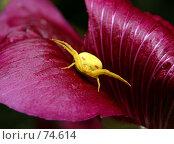 Купить «Паук на цветке», фото № 74614, снято 21 августа 2007 г. (c) Сергей Лаврентьев / Фотобанк Лори