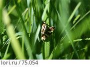 Мотылек. Стоковое фото, фотограф Поляков Денис / Фотобанк Лори
