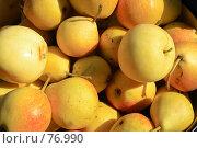 Купить «Груши в лучах яркого солнца», фото № 76990, снято 27 августа 2007 г. (c) Михаил Николаев / Фотобанк Лори