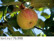 Купить «Спелое яблоко», фото № 76998, снято 27 августа 2007 г. (c) Михаил Николаев / Фотобанк Лори