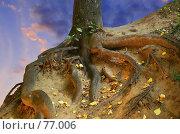 Купить «Смотри в корень», фото № 77006, снято 21 июля 2007 г. (c) Анатолий Теребенин / Фотобанк Лори