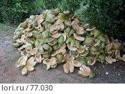 Купить «Кора кокосовых орехов», фото № 77030, снято 17 июня 2007 г. (c) Валерий Шанин / Фотобанк Лори