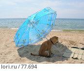 Купить «Утомлённая солнцем», фото № 77694, снято 12 июня 2007 г. (c) Алексей Маринченко / Фотобанк Лори