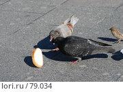 Купить «Птичий обед», фото № 79034, снято 2 сентября 2007 г. (c) Дмитрий Карасев / Фотобанк Лори