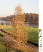 Купить «Золотая берёза», фото № 79070, снято 22 октября 2006 г. (c) Бугаева Вероника Владимировна / Фотобанк Лори