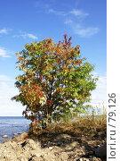 Купить «Одинокое дерево», фото № 79126, снято 3 августа 2007 г. (c) Анна / Фотобанк Лори
