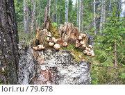 Купить «В лесной глуши...», фото № 79678, снято 6 июня 2007 г. (c) Круглов Олег / Фотобанк Лори