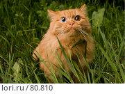 Купить «У страха глаза велики», фото № 80810, снято 21 мая 2006 г. (c) Николай Федорин / Фотобанк Лори