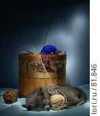 Купить «Этюд с котенком», фото № 81846, снято 1 февраля 2006 г. (c) Олег Безручко / Фотобанк Лори