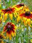 Маленькие солнышки вертикальный, фото № 83314, снято 11 июля 2007 г. (c) ДЕНЩИКОВ Александр Витальевич / Фотобанк Лори