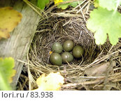 Купить «Гнездо варакушки», фото № 83938, снято 19 марта 2019 г. (c) Светлана Кириллова / Фотобанк Лори