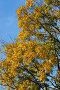Желтый, зеленый, голубой, фото № 84202, снято 20 октября 2006 г. (c) Argument / Фотобанк Лори