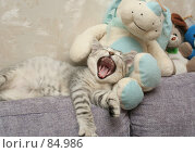 Купить «Серый котенок зевает лежа среди мягких игрушек», фото № 84986, снято 5 сентября 2007 г. (c) Останина Екатерина / Фотобанк Лори