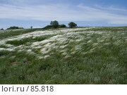 Купить «Ковыльная степь», фото № 85818, снято 18 мая 2006 г. (c) Борис Панасюк / Фотобанк Лори