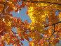 Красное.Желтое.Голубое, фото № 86746, снято 22 сентября 2007 г. (c) Наталья Волкова / Фотобанк Лори