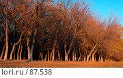 Купить «Осенний лес», фото № 87538, снято 1 января 2004 г. (c) Игорь Муртазин / Фотобанк Лори
