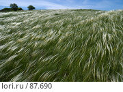 Купить «Ковыльная река», фото № 87690, снято 18 мая 2006 г. (c) Борис Панасюк / Фотобанк Лори