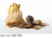 Купить «Мышонок, сидящий на кучке монет», фото № 88758, снято 23 сентября 2007 г. (c) Сергей Лаврентьев / Фотобанк Лори