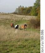 Купить «Лошади в поле», фото № 89086, снято 26 сентября 2007 г. (c) Анастасия Некрасова / Фотобанк Лори