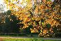 В городском парке, фото № 90114, снято 29 сентября 2007 г. (c) Alla Andersen / Фотобанк Лори