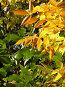 Ясень между летом и осенью, фото № 90302, снято 19 января 2017 г. (c) Светлана Кучинская / Фотобанк Лори