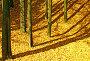 Золотая осень. (Mellow autumn. ), фото № 92450, снято 1 октября 2007 г. (c) Анатолий Теребенин / Фотобанк Лори