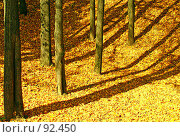 Купить «Золотая осень. (Mellow autumn. )», фото № 92450, снято 1 октября 2007 г. (c) Анатолий Теребенин / Фотобанк Лори