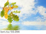 Купить «Осенняя дубовая ветка на фоне неба и ее отражение в воде», фото № 93094, снято 22 сентября 2007 г. (c) Елена Блохина / Фотобанк Лори
