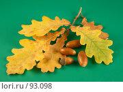 Купить «Осенняя дубовая ветка и желуди на зеленом фоне», фото № 93098, снято 4 октября 2007 г. (c) Елена Блохина / Фотобанк Лори