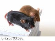 Купить «Две мыши», фото № 93586, снято 23 сентября 2007 г. (c) Сергей Лаврентьев / Фотобанк Лори