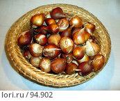 Купить «Луковицы тюльпанов», фото № 94902, снято 8 октября 2007 г. (c) Светлана Кириллова / Фотобанк Лори